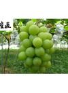 温室シャインマスカット 約1.5kg(2房入) 6,180円(税込)
