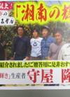 湘南の輝き ハウスみかん 1パック 951円(税込)