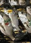 広島県産 黒鯛 627円(税込)