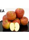 シナノスイート 約5kg 14~18玉 ご家庭用 2,380円(税込)