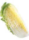白菜 106円(税込)