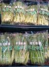小松菜 95円(税込)