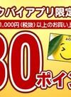 1000円(税抜)以上お買上げで30Pプレゼント! 30ポイントプレゼント