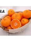南柑20号 家庭用 S~Lサイズ混合 約10kg(120~130玉入) 3,080円(税込)