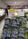 小松菜 52円(税込)