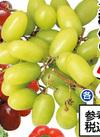 種無しぶどう <赤・緑> 84円(税込)