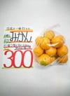 デビュー記念❗有田みかんをお試し20円引き❗ 20円引