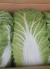 白菜 60円(税込)