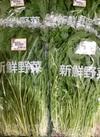 水菜 108円(税込)
