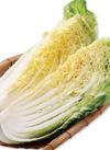 白菜 73円(税込)