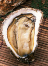 生牡蠣(生食用) 498円