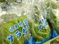 サラダ菜 70円(税抜)