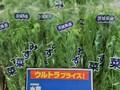 水菜 59円