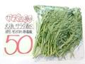 春菊(無農薬) 50円