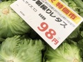 今朝採りレタス 98円(税抜)
