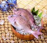 真鯛(養殖) 1,000円(税抜)