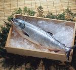 塩銀さけ(甘口)養殖 98円(税抜)