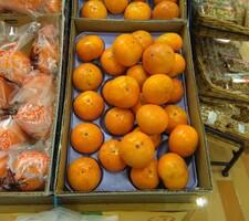 富有柿 98円(税抜)
