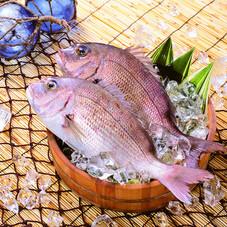 真鯛(養殖) 480円(税抜)