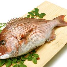 真鯛(刺身用・お汁用)100g 157円(税抜)