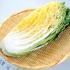 白菜 120円(税抜)