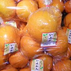 いよかん 398円(税抜)