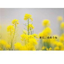 メモリアル 100円(税抜)