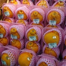 デコポン(2個) 398円(税抜)
