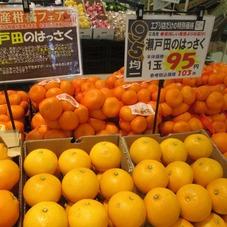 瀬戸田の八朔 95円(税抜)