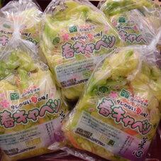 春キャベツ 198円(税抜)