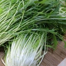 切水菜 99円(税抜)