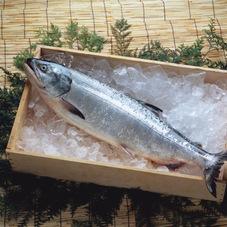 塩紅鮭半身 1,058円