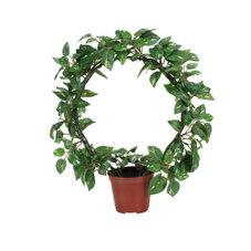 人工観葉植物 ポトス 780円