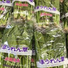 ほうれん草 98円(税抜)