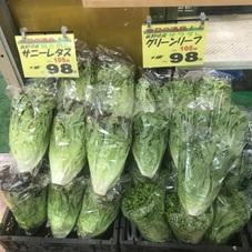 グリーンリーフサニーレタス 98円(税抜)