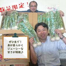 野辺地葉つきこかぶ 128円(税抜)