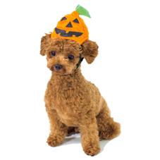 かぼちゃハット 998円(税抜)