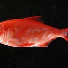 赤魚 148円(税抜)