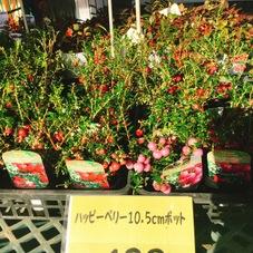 ハッピーベリー 498円(税抜)