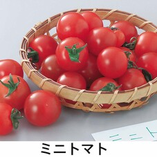 生産者限定ミニトマト 99円(税抜)