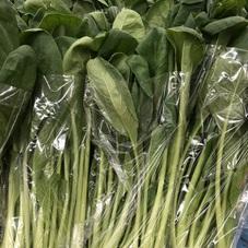 小松菜2袋で100円 100円