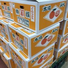 みかん10kg 1,000円