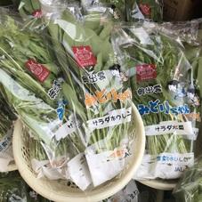 サラダほうれん草、サラダ水菜 100円(税抜)