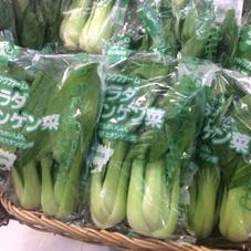 チンゲン菜 98円(税抜)