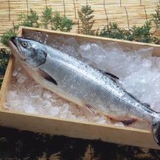 厚切甘口銀鮭切身 150円(税抜)