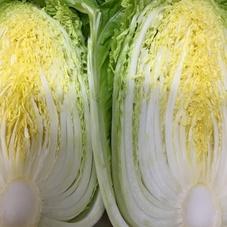 白菜(鍋のとも) 98円(税抜)