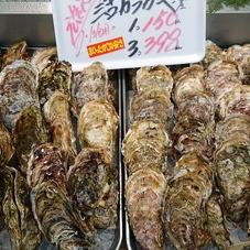 殻付き真かき 398円(税抜)