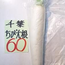 大根(S) 60円