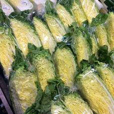 白菜 100円(税抜)