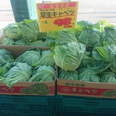 早生キャベツ 98円(税抜)
